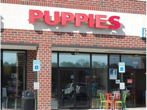 puppies brick nj council urged act on puppy store ban brick nj patch