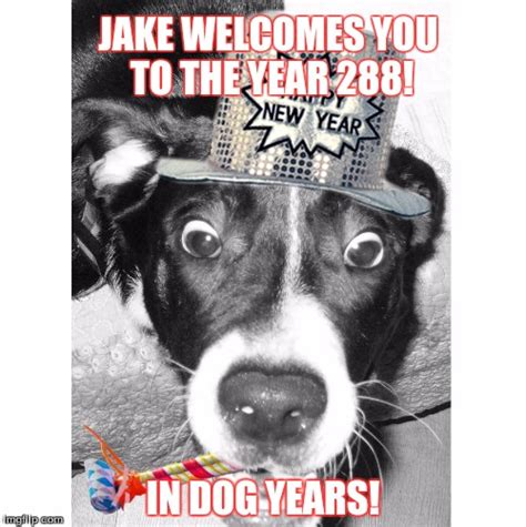 Jake The Dog Meme - image tagged in newyears jake imgflip