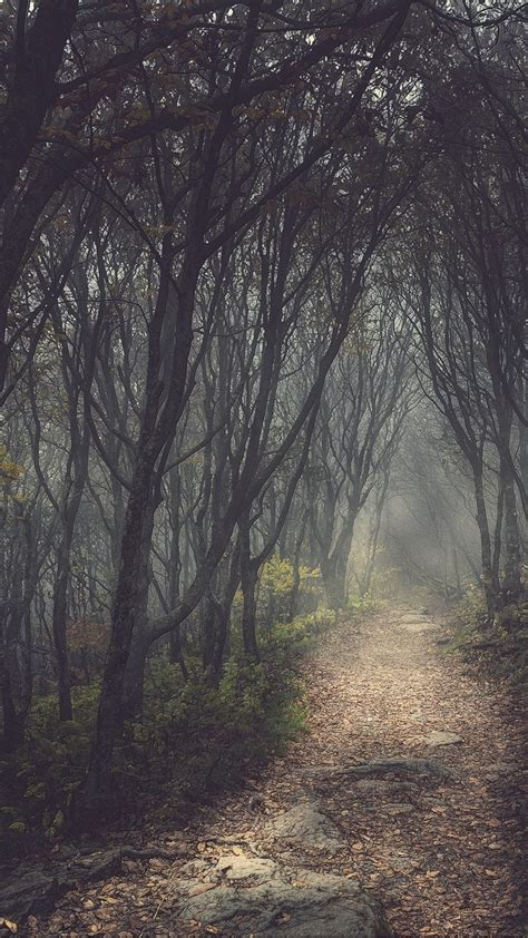mysterious forest small path htc  wallpaper