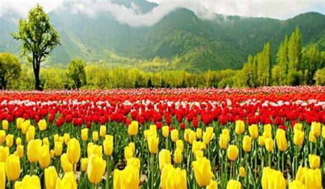 6 taman bunga tulip termegah di dunia mediatani