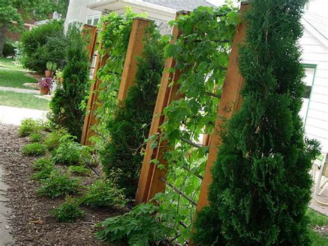 Gardening Trellis Ideas Garden Fence Trellis Design Ideas Home Interior Design