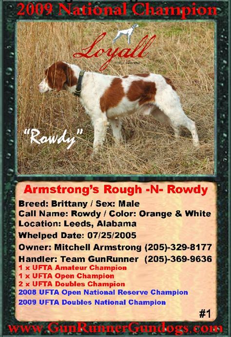 rough n rowdy gunrunner gundogs armstrong s rough n rowdy