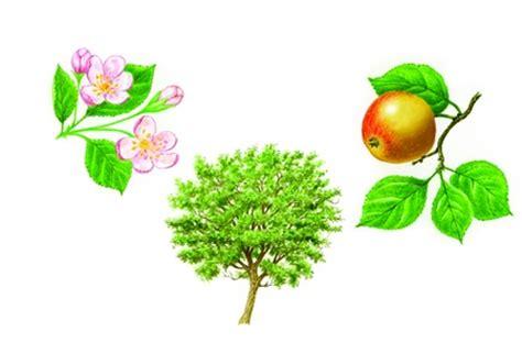 il fiore e la riproduzione angiosperme in quot enciclopedia dei ragazzi quot