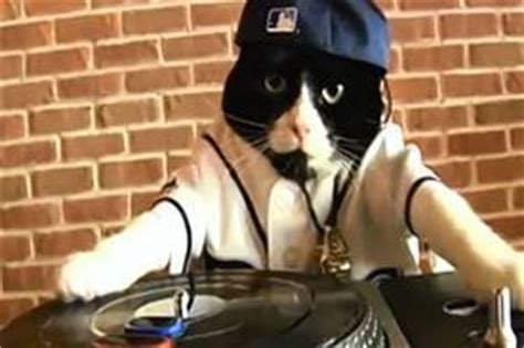 tampa bay rays dj kitty at the top of sports mascots heap