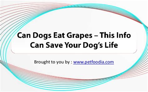 can dogs eat spam can dogs eat grapes this info can save your s