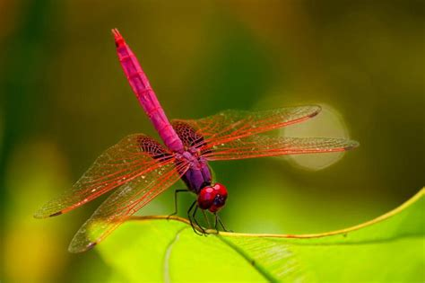 images of dragonflies of the dragonfly inspire machine vision