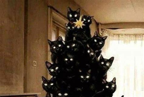 your creepy black cat christmas tree has arrived weknowmemes
