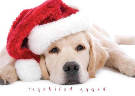 dog christmas card quotes quotesgram