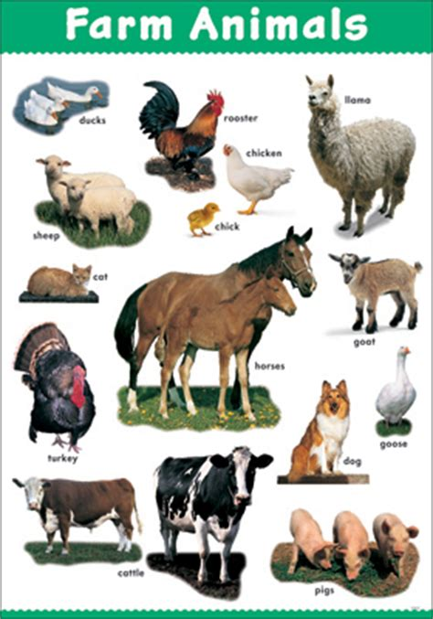 Look At That Farm Animals dominie farm animals look and learn chart