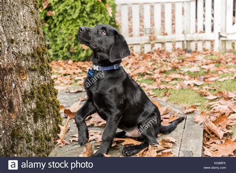 treats for puppies 3 months fallen trees black and white stock photos fallen trees black and white stock images