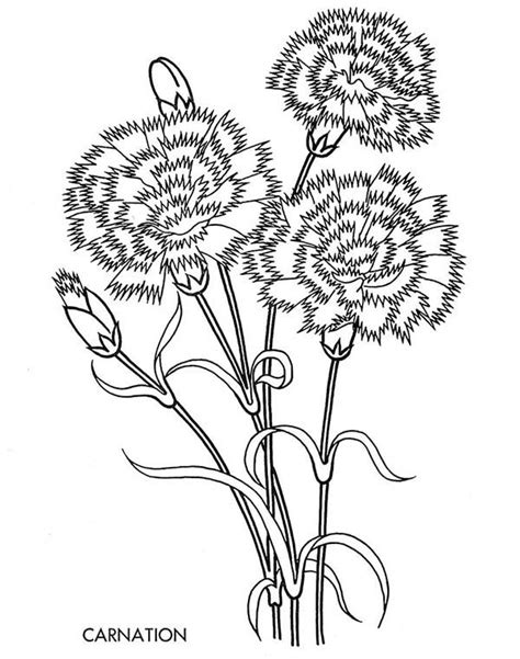 free coloring pages of carnations