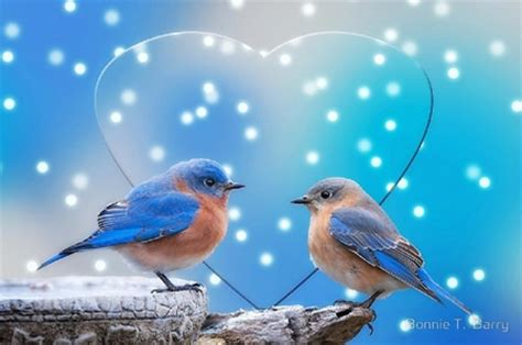 two bluebirds birds animals background wallpapers on