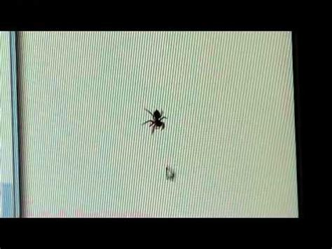 spider chasing mouse cursor youtube