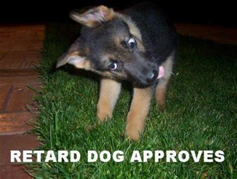 retarded dogs approvals retarded threadbombing