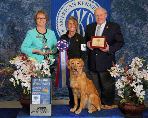 goldenloch golden retrievers winners crowned at rally and obedience national chionships american kennel club