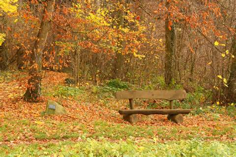 bench in forest file bench forest heidelberg jpg wikimedia commons