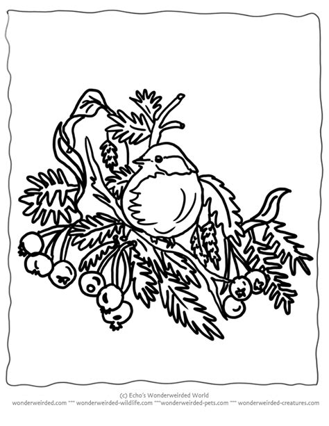 christmas bird coloring page christmas tree line drawing cliparts co