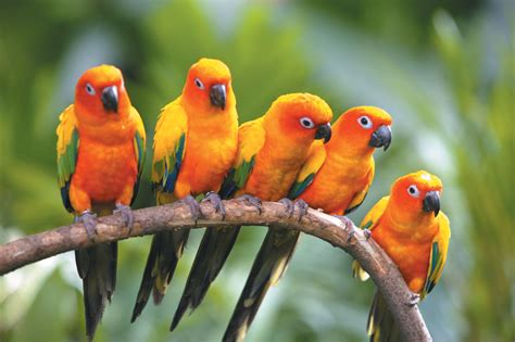 wallpaper birds wallpapers hd desktop wallpapers free online bird