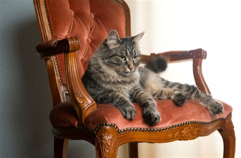 How To Keep Cat Sofa by How To Cat Proof Your Petmd