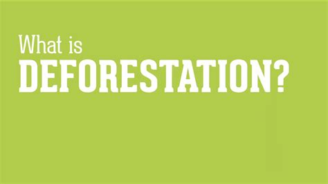 what is years what is deforestation