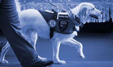 service dog housing laws federal service dog registration emotional support dog registration