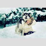 Cute Husky In Snow | 640 x 426 jpeg 41kB