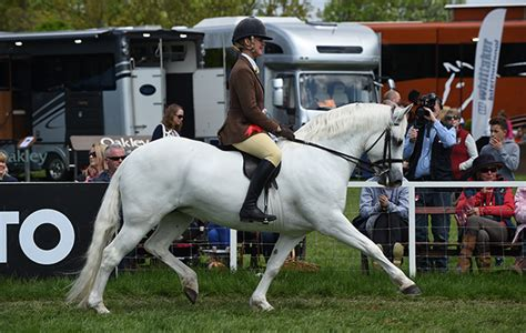 Slievebloom Equestrian   18 show animals that shone in the ring at royal windsor
