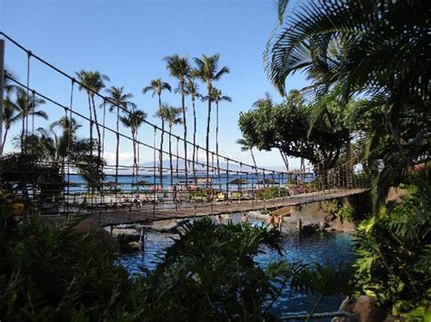 swinging bridge resort swinging rope bridge picture of hyatt regency maui