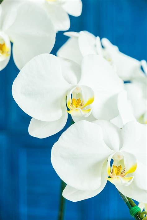 fiore di orchidea fiori di orchidea scaricare foto gratis