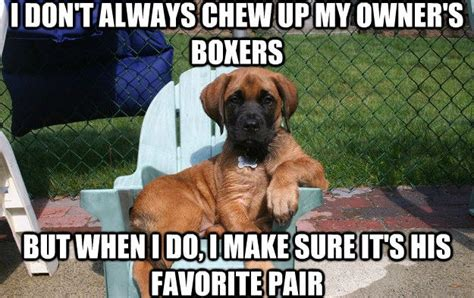 Memes About Dogs - 15 memes only dog owners will understand thethings