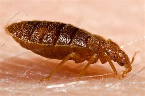 How Are Bed Bugs Spread by Bed Bugs Controlling Their Spread Space For