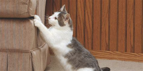 Cat Scratching by 10 Ways To Stop Your Cat From Ruining Your Furniture