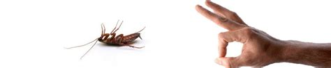 bed bug treatments indianapolis in 317 520 9800