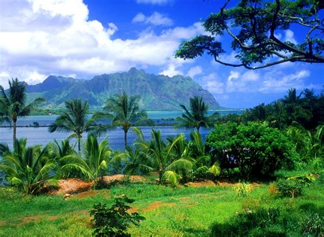 Landscaping Oahu Usa Hawaiian Islands