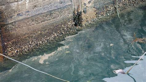 spray painters kiama blue green algae warning for kiama kiama independent