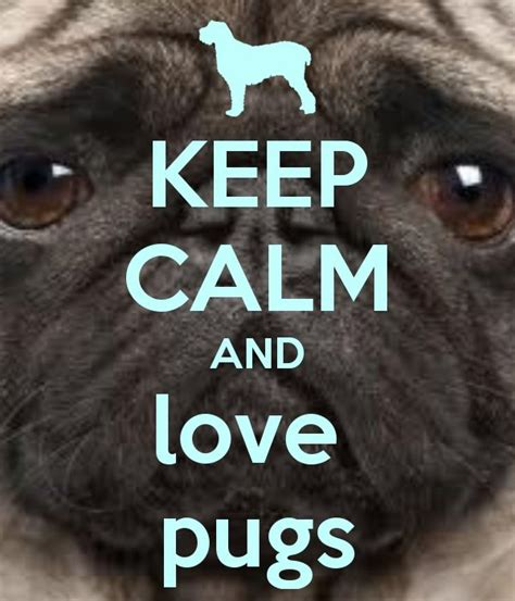 words with pug the words say it all pugs to