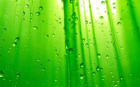 Kamu Itu Lucu Hijau gambar wallpaper 3d warna hijau gambar dp bbm