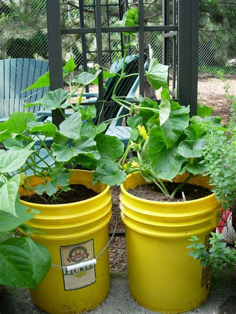 534 Best Images About Container Vegetable Gardening On 5 Gallon Vegetable Garden