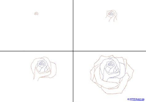 Drawing In Pencil Step By Step by Pencil Drawings Of Roses Step By Draw A In Drawing