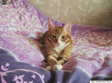 kitten pees on bed kitten pees on bed 28 images keeping cats from peeing