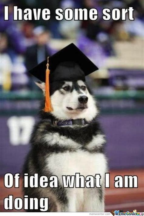 Husky Meme - husky memes best collection of funny husky pictures