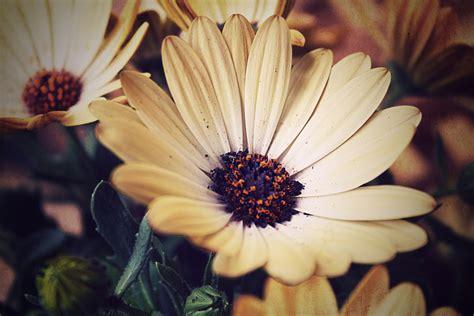 imágenes flores vintage original size of image 473446 favim com