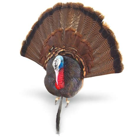 Turkey And Beard Fan Mounting Kit 660484 Taxidermy