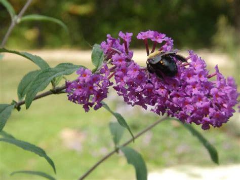 Butterfly Tunik Mo T1310 3 butterflies engler park farmington missouri usa butterflies