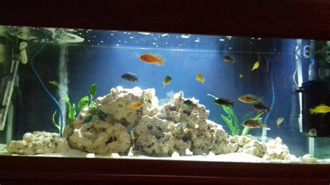 mbuna aquascape mbuna aquascape and lolesinmo com