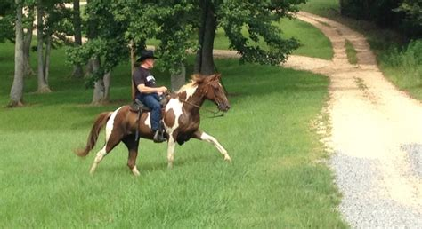 roy moore horse twitter williamthornton on twitter quot former chief justice roy