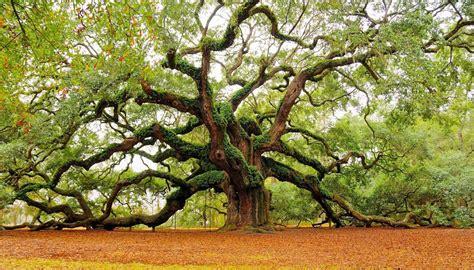 in tree tree wallpaper