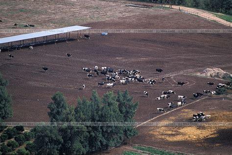 byu off cus housing cattle feedlot