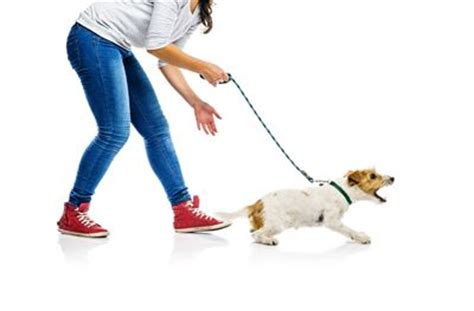leash aggression in dogs behavior problems leash aggression dogrelations nyc