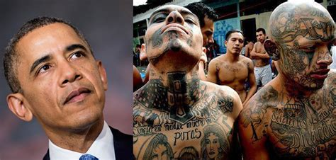 whistle blower obama knowingly let in ms 13 gang members